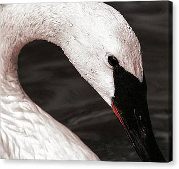 Canvas Print featuring the photograph Swan Neck by Jean Noren