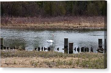 Swan Of Crooked River Canvas Print by Wendy Shoults