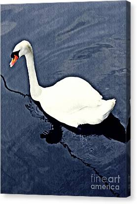 Canvas Print featuring the photograph Swan On The Rhine by Sarah Loft