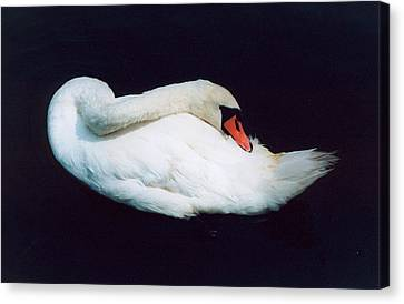 Swan Canvas Print by Richard Mansfield