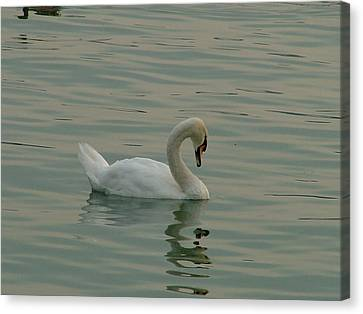 Swan Canvas Print by Rita Fetisov