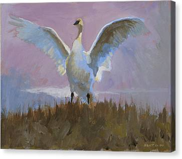 Swan Canvas Print by Robert Bissett