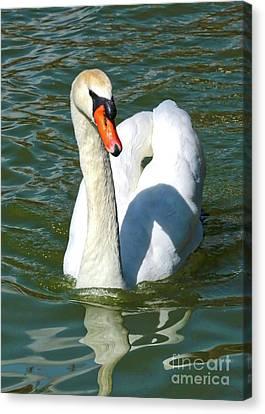 Glassy Wing Canvas Print - Swan Swirls by Carol Groenen