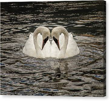 Swan Times Two Canvas Print by Mary Hone