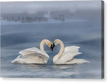 Swan Valentine - Blue Canvas Print