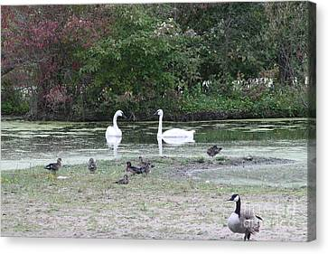 Swan View Lake Canvas Print