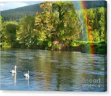 Swans And Double Rainbow 1 Canvas Print