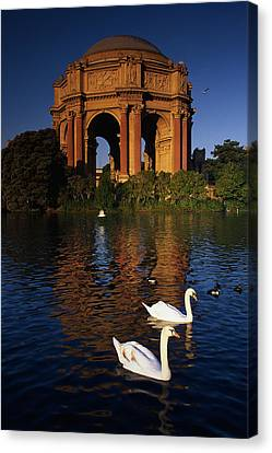 Swans And Palace Of Fine Arts Canvas Print