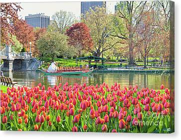 Swans And Tulips 2 Canvas Print by Susan Cole Kelly