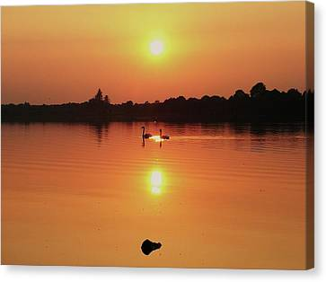 Swans At Sunset  Canvas Print by Martina Fagan