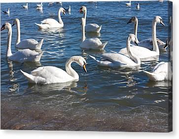 Swans Canvas Print by Boyan Dimitrov