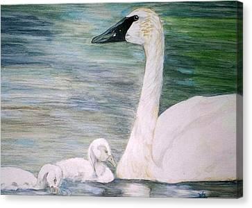 Swans Canvas Print by Debra Sandstrom