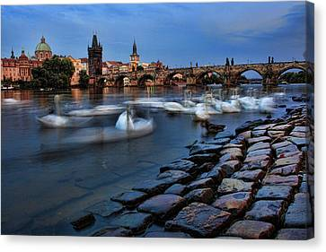Swans In Prague Canvas Print by James Bond