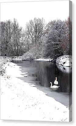 Swans In The Snow Canvas Print by Gary Eason