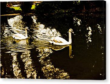 Swans On River Wey Canvas Print by Patrick Kain
