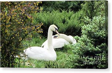Swans On The Green Grass Canvas Print