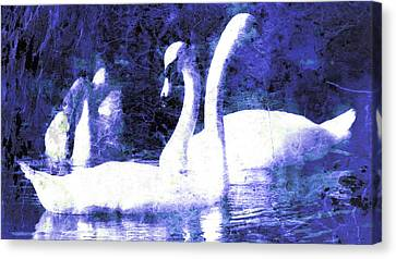 Canvas Print featuring the digital art Swans On Water  by Fine Art By Andrew David