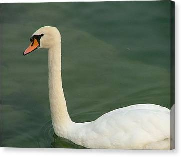 Swan's Portrait Canvas Print by Rita Fetisov