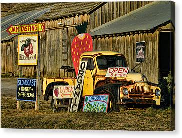 Canvas Print featuring the photograph Swanton Berry Farm / International Pickup by Steve Siri