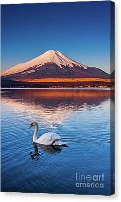 Swany Canvas Print by Tatsuya Atarashi