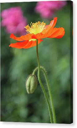 Swaying In The Breeze Canvas Print by Suzanne Gaff