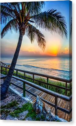 Swaying Palms Canvas Print by Debra and Dave Vanderlaan