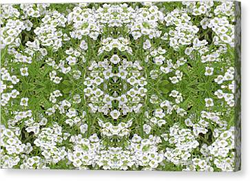 Canvas Print featuring the digital art Sweet Alyssum Abstract by Linda Phelps
