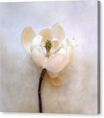 Sweet Bay Magnolia Bloom Canvas Print