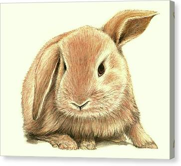 Canvas Print featuring the drawing Sweet Bunny by Heidi Kriel