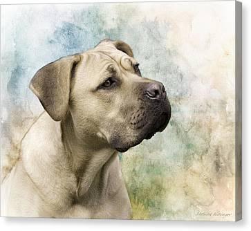 Sweet Cane Corso, Italian Mastiff Dog Portrait Canvas Print
