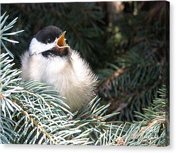 Sweet Chickadee Canvas Print