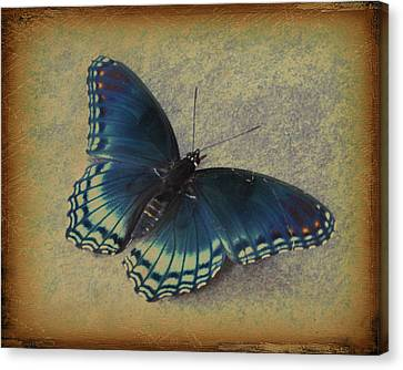 Sweet Flutterby Canvas Print by Jan Amiss Photography