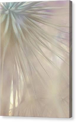 Sweet Fragile Canvas Print