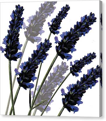 Sweet Lavender Canvas Print