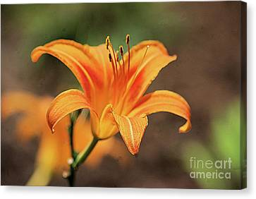 Sweet Lilly In Orange Canvas Print