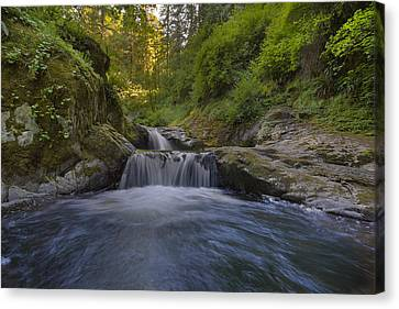 Sweet Little Waterfall Canvas Print by David Gn