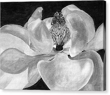 Sweet Magnolia Canvas Print by Christina Steward