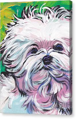 Maltese Canvas Print - Sweet Maltese  by Lea S