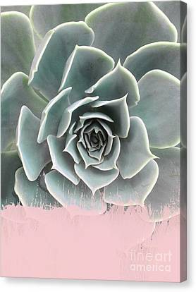 Sweet Pink Paint On Succulent Canvas Print