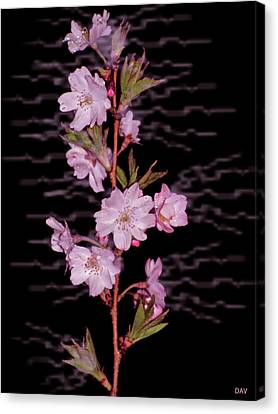 Sweet Smell Of Spring Canvas Print by Debra     Vatalaro