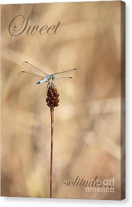Sweet Solitude Canvas Print by Carol Groenen
