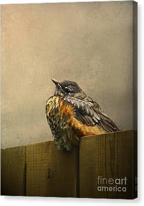 Sweetly Sitting Canvas Print by Jan Piller
