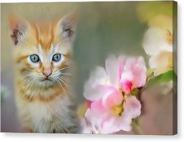 Sweetness In A Small Package Canvas Print