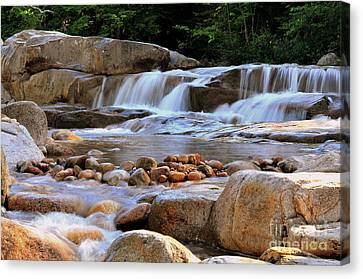 Canvas Print - Swift River  by Catherine Reusch Daley