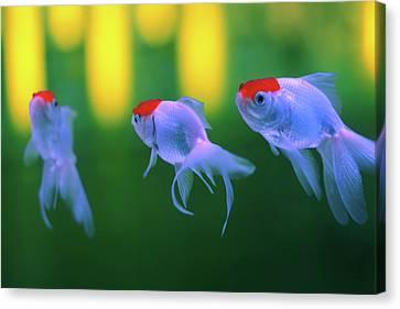 Swimming Fishes Underwater Canvas Print by Yuki Crawford