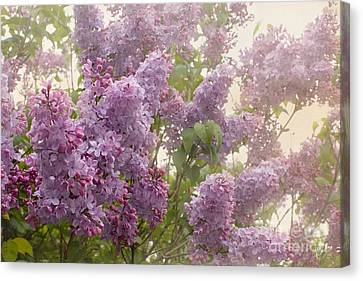 Swimming In A Sea Of Lilacs Canvas Print by Cindy Garber Iverson