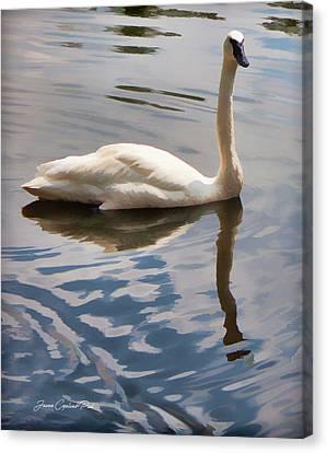 Swimming Swan Canvas Print