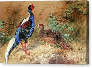 Swinhoe's Pheasant  Canvas Print by Joseph Wolf