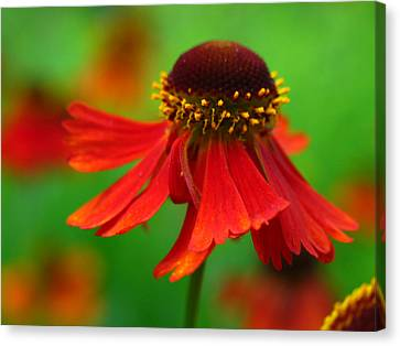 Swirling Sneezeweed Canvas Print by Juergen Roth