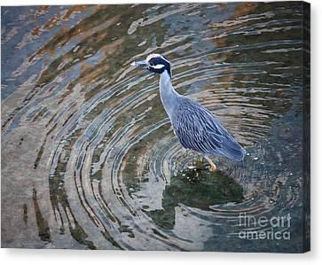 Swirls Around Heron Canvas Print by Carol Groenen